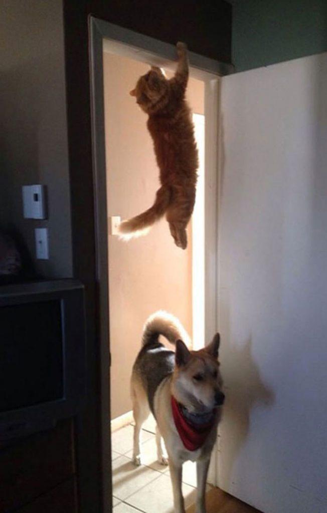 Derp cat | HilariousGifs.com